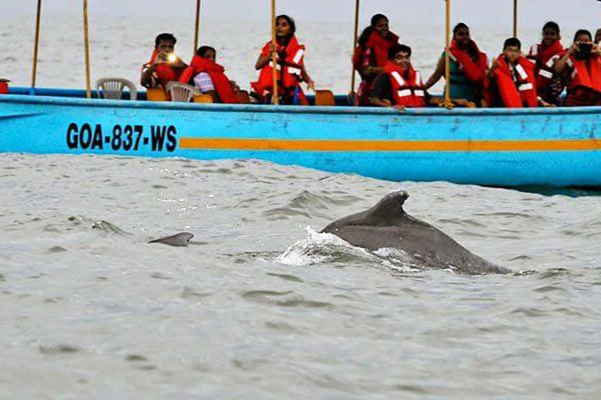 Dolphin tour Goa